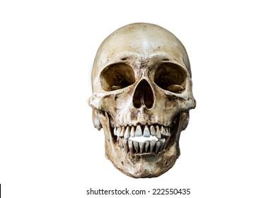 Isolated Skeleton head
