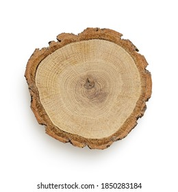 Isolated slice of tree on white background for scene creator