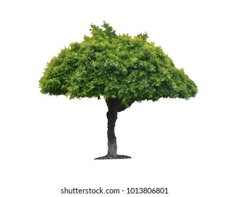 Banyan Tree Leaves Images, Stock Photos & Vectors   Shutterstock