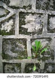Isolated small plant on the stone wall