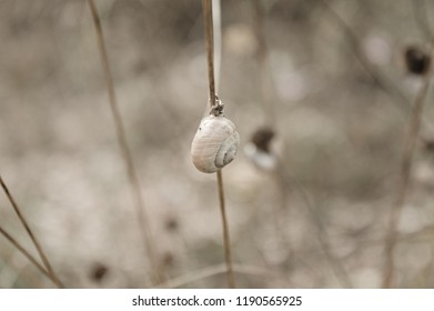 Isolated snail on the plant (Marche, Italy, Europe)