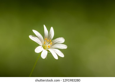 Isolated springtime white flower. Beautiful, fresh and delicate. Amazing natural creation.