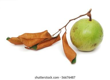 Isolated Star-apple fruit