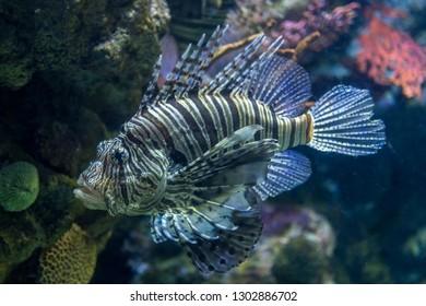Isolated Sunfish underwater