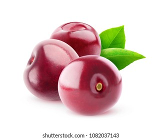 Isolated sweet cherries. Three cherry fruits (no stems) isolated on white background with clipping path