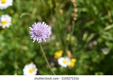 Isolated Thistles flowering