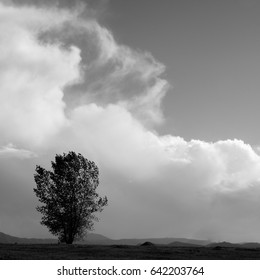 Isolated tree with approaching storm
