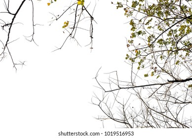 Isolated tree branches on a white background