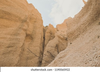 Isolated tree in the Canyon (Lame Rosse, Italy, Europe)