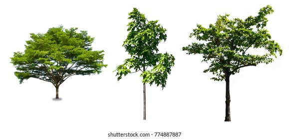Isolated tree collection on white background. , The collection of tree.