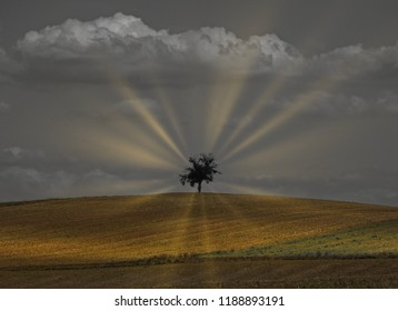 An isolated tree evoking a mystic or biblical feeling