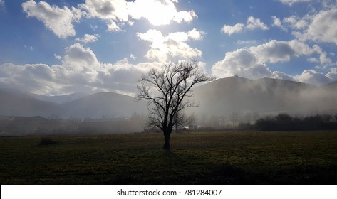 Isolated tree in a foggy landscape