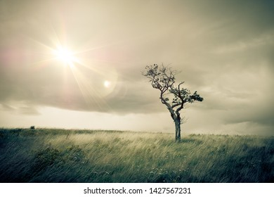 Isolated tree illustration of mourning and sadness