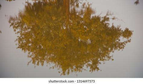 Isolated tree leaves reflection in water of a pond blurry photo