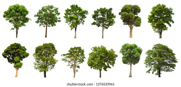 isolated tree is located on a white background. Suitable for all types of applications