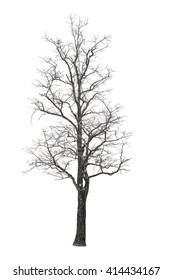 Isolated tree with no leaves on white background