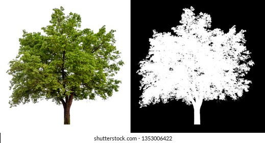 isolated tree on white background with alpha channel