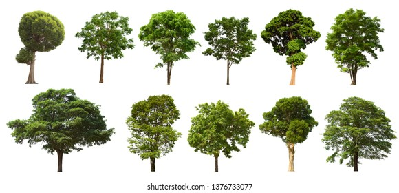 Isolated tree set Located on a white background, large images are suitable for all types of work.