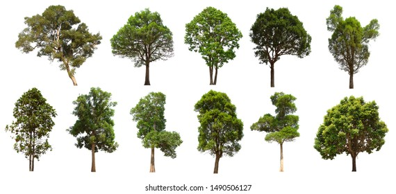 isolated tree set is located on a white background. Collection of isolated tree on white background Clear images, suitable for all types of work