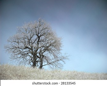 Isolated tree at Spring in infrared
