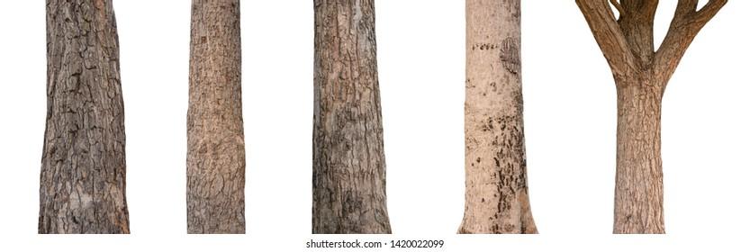 Walnut Tree Trunk Images, Stock Photos & Vectors | Shutterstock