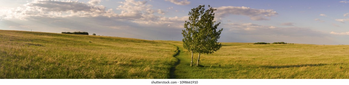Isolated Tree and Wide Panoramic Landscape of Prairie Grassland on Nose Hill Natural Park in City of Calgary Alberta at Foothills of Canadian Rocky Mountains