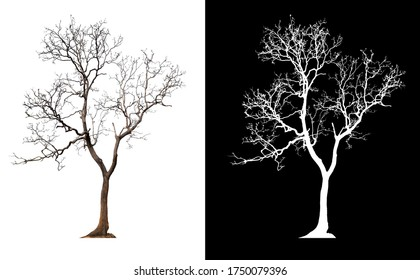 isolated tree without leaves with clipping path and alpha channal