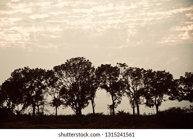 Isolated trees around an urban area in the afternoon