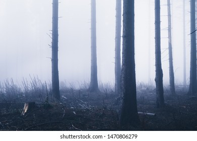 Isolated trees in a clearing in the forest