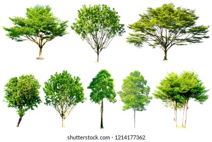 Isolated trees collection with clipping path on white background use for decoration architecture website , magazine and advertisement.