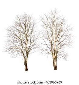 Isolated trees with no leaves on white background