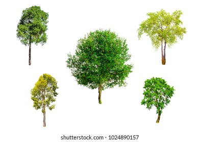 Isolated trees on white background , The collection of trees.beatiful autumnal colors