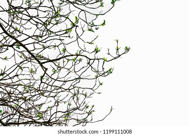 Isolated Trees on the white background. This is a collection of trees from Thailand.It a beauty.