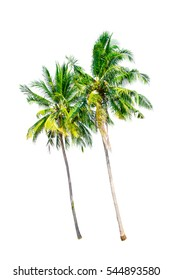 Isolated trees on white background , Trees collection , Coconut trees.