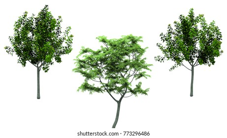Isolated trees on white background , The collection of trees.beatiful autumnal colors, 3D rendering