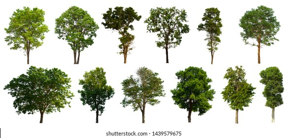 Isolated trees Set on a white background