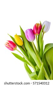 Isolated tulips. Set of five different color tulips isolated on white background with clipping path.