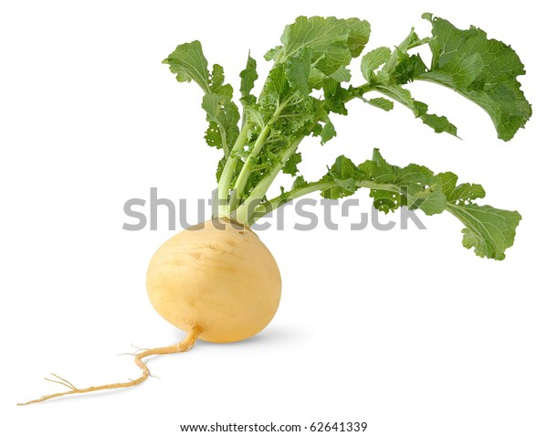 Isolated turnip. Fresh yellow turnip with big leaves isolated over white background