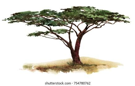 Isolated watercolor savannah tree.