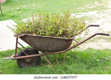 Isolated wheelbarrow with plants and flowers inside (Marche, Italy, Europe)