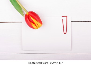 Isolated white greeting card with a paper clip and tulips.