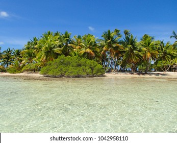 Isolated and wild coconut tree island