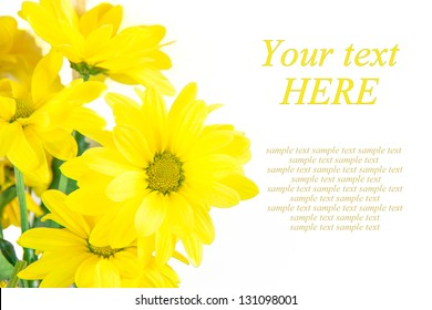 Isolated yellow daisies as the background