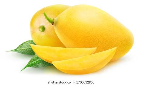 Isolated yellow mangoes. Two mango fruits and slices isolated on white background