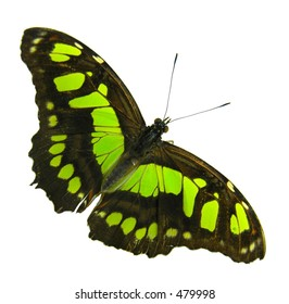 Isolated yellow-black buttefly