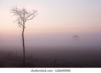 isolated young leafless tree in front of a mystic foggy sunset