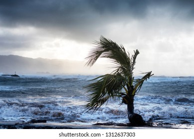 Isolated young palm tree at Haleiwa Alii Beach Park on Oahu, Hawaii on a windy day