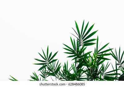 Isolates background of leaves of bamboo