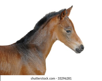 isolation of profile of 6 hours old foal