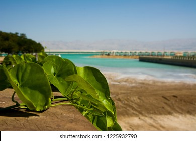 Israel View of Dead Sea beach. Incredible colors of sea. variable focus shooting through leaves of a flower